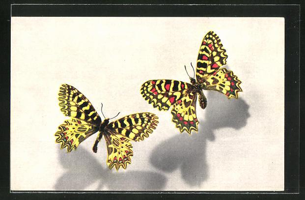 AK Comité National de l'Enfance, Thais, Zerynthia, Schmetterling