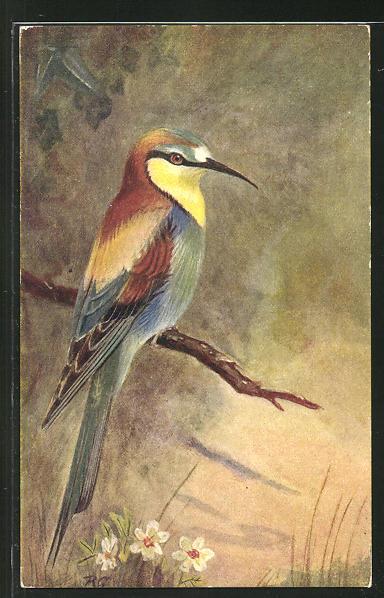 AK Guepier, Vogel auf einem Zweig