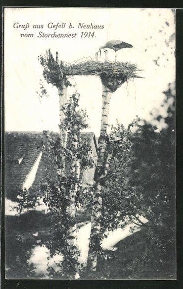 AK Gefell, Blick auf ein Storchennest 1914