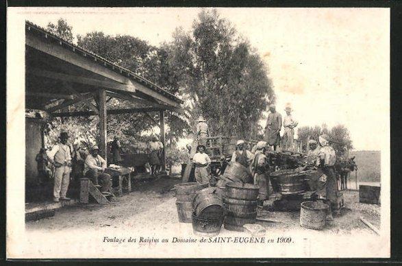 AK Saint-Eugene, Foulage des Raisins au Domaine en 1909