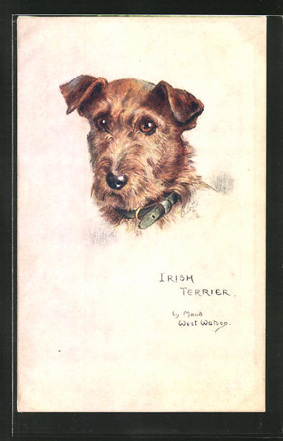 Künstler-AK Irish Terrier, Sketchy Dog Studies