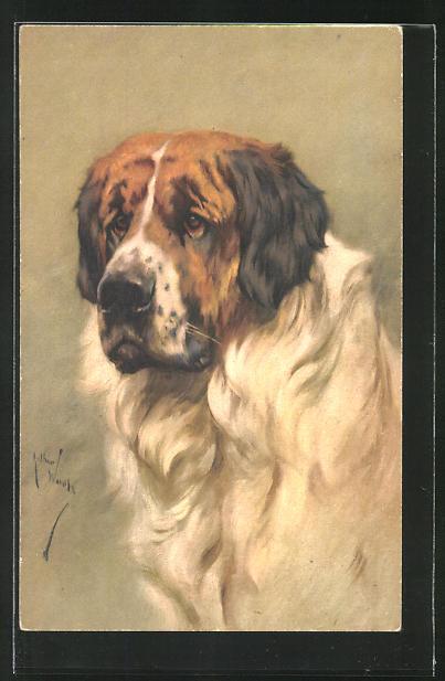 Künstler-AK Portrait eines Bernhardiners