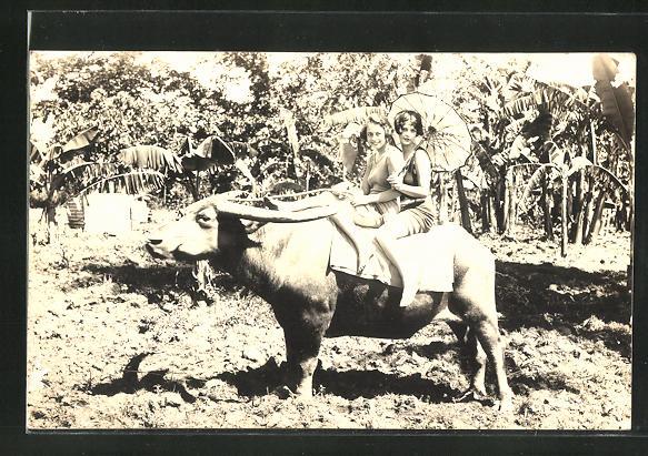 AK Zwei hübsche Damen reiten auf einem Stier im Palmenhain
