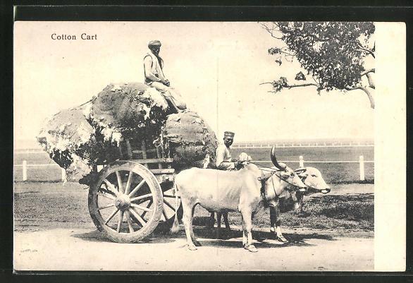 AK Cotton Cart, Arbeiter mit Ochsen-Gespann transportieren Baumwolle