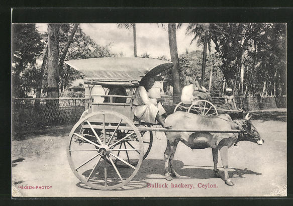 AK Ceylon, Bullock hackery, Ochsen-Gespann