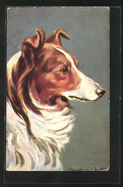 Künstler-AK Ermenegildo Antonio Donadini: Collie, Schäferhund