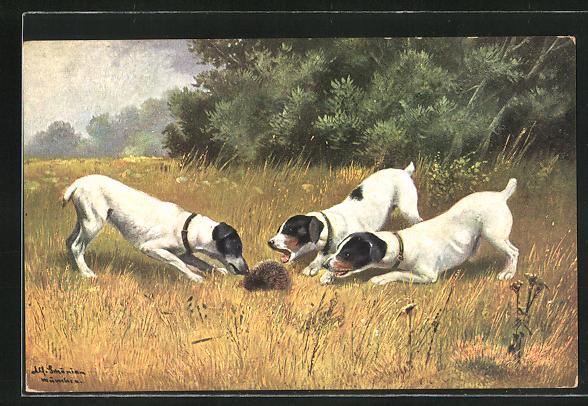 Künstler-AK Alfred Schönian: Drei Hunde spielen mit einem Igel