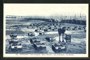 AK Arcachon / Cote d'Argent, Parc a Huitres, Les Collecteurs, La Recolte