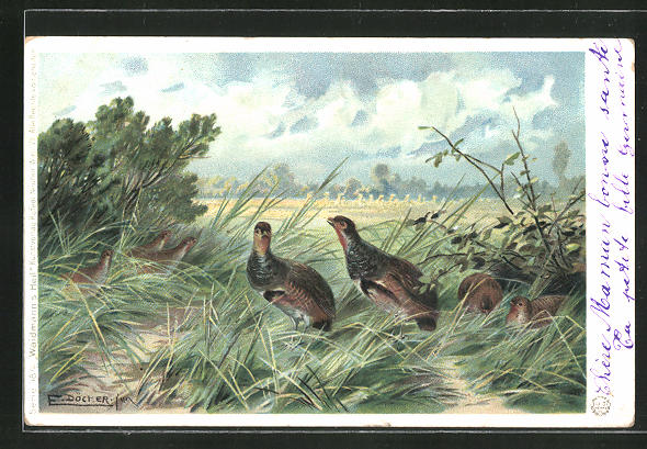 Künstler-AK E. Döcker: Rebhühner im hohen Gras