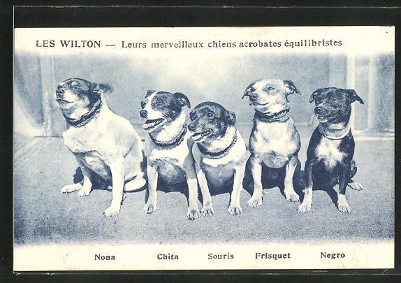AK Les Wilton, Leurs merveilleux chiens acrobates equilibristes, Nona, Chita, Souris
