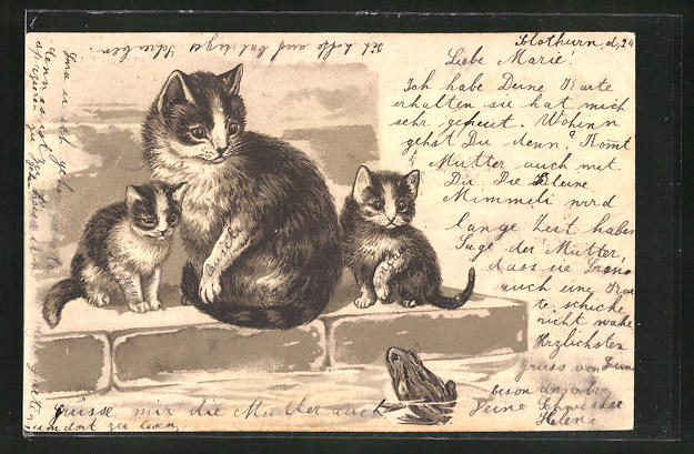 Präge-Lithographie Katze mit Katzenkindern und Frosch