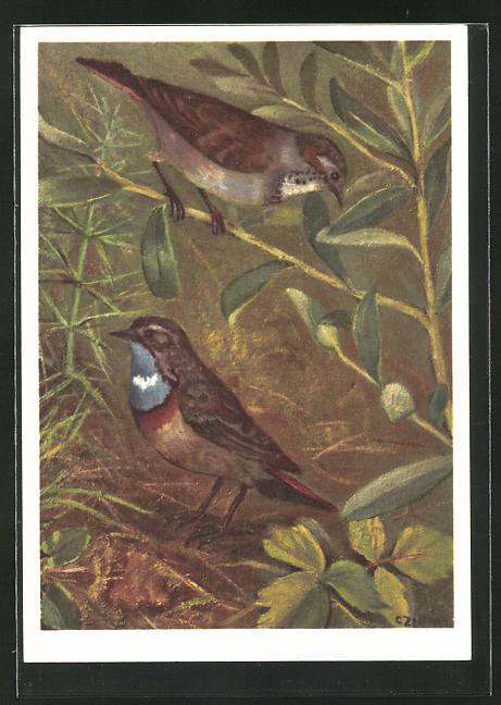 Künstler-AK Blaukehlchen auf einem Zweig sitzend