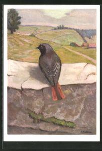 Künstler-AK Hausrotschwanz sitzt auf einer Steinmauer
