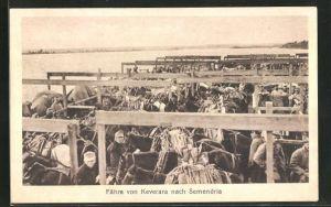 AK Keverara, Fähre nach Semendria