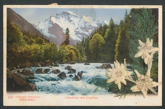 Trockenblumen-AK Lütschine mit Jungfrau, Getrocknetes Edelweiss