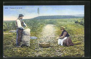 AK Fideles a la terre, Bauern ernten Kartoffeln