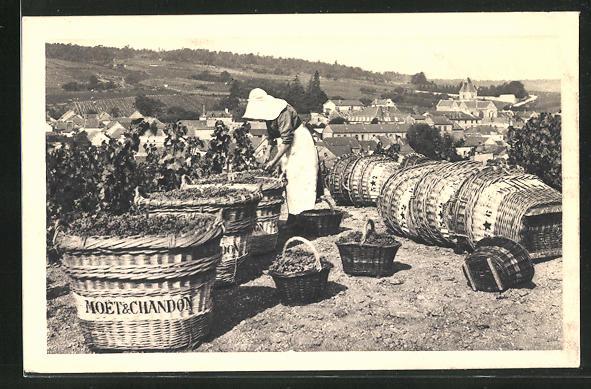 AK Frau bei der Weinlese, Weintrauben in Körben mit dem Schriftzug Moet & Chandon