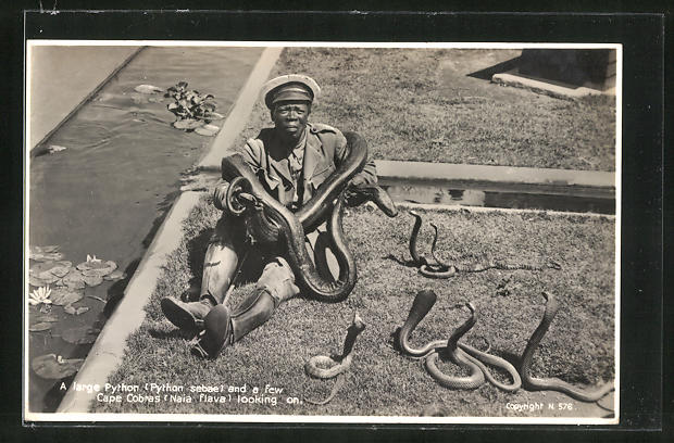 AK A large Python and a few Cape Cobras looking on, Afrikaner mit Schlangen