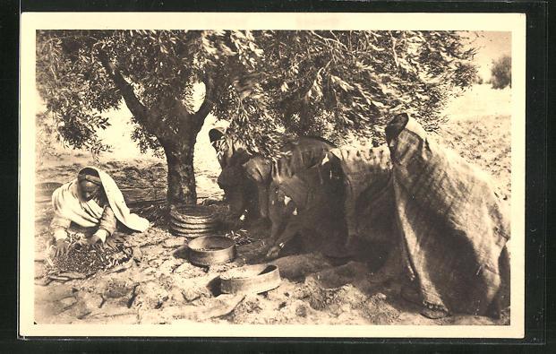 AK Sfax, Ramassage et vannage des olives à la main, Bauern sammeln die Oliven auf, Landwirtschaft