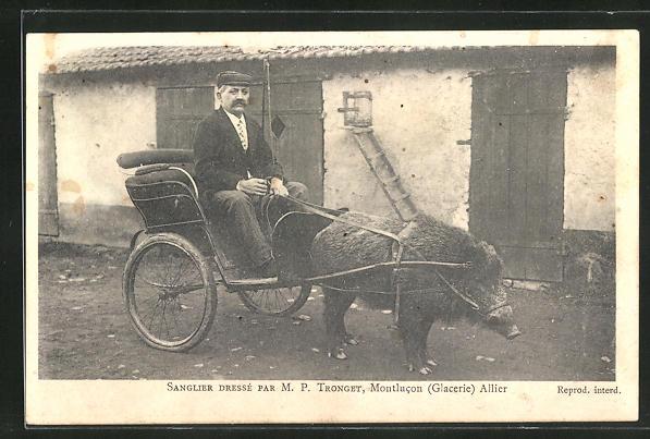 AK Montlucon, M. P. Trongent mit abgerichtetem Wildschwein als Zugtier einer Droschke