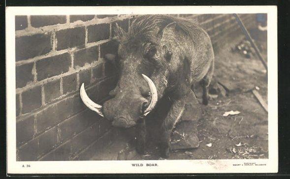 AK Wild Boar, Warzenschwein, Rhodesien
