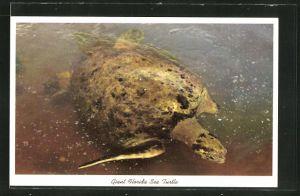 AK Giant Florida Sea Turtle, Meeresschildkröte