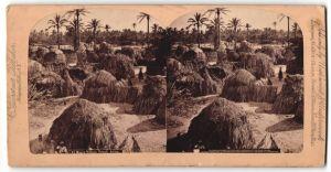 Stereo-Fotografie C. Bierstadt, Niagara Falls, NY, Ansicht Tripoli, Dorfansicht, rückseitig weiteres Stereo-Foto