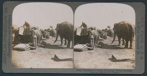 Stereo-Fotografie American Stereoscopic Co., Indische Armee Elefanten im Einsatz