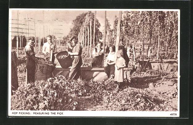 AK Männer und Frauen bei der Hopfenernte, Brauerei