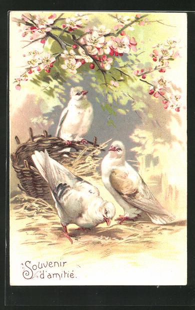 Präge-AK Tauben picken Körner unter einem blühenden Obstbaum