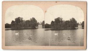 Stereo-Fotografie Schwäne auf einem See