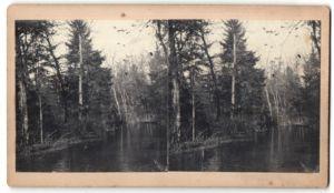 Stereo-Fotografie Flusslauf in einem Auwald