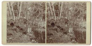 Stereo-Fotografie Naturbelassener Flusslauf im Spreewald