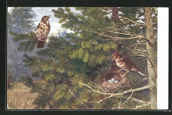 Künstler-AK Singdrossel-Paar am Nest