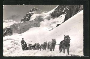 AK Polarhunde auf dem Jungfraujoch