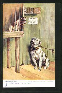 AK Hund im Käfig und Hund an der Leine