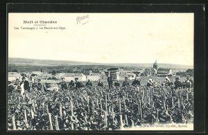 AK Moet et Chandon, Les Vendanges á Le Mesnil-sur-Oger