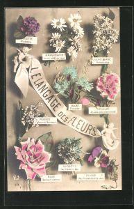 AK Le Langage des Fleurs: Bluet Timidite, Blumensprache