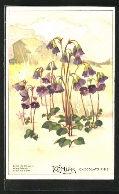 AK Alpenglöckchen Blumen vor Bergpanorama, Reklame für Kohler Schokolade