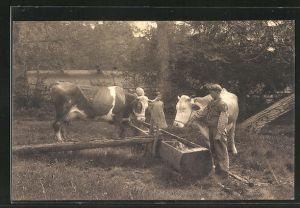 AK Lausanne, Bauernkinder führen Kühe zur Tränke
