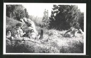 AK Murmeltiere im Wildpark Peter und Paul bei St. Gallen