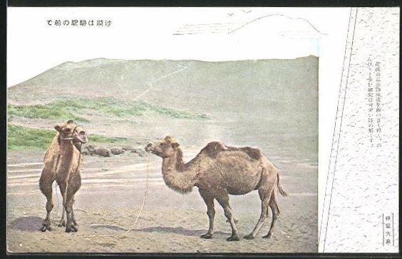 AK Kamele in karger Berglandschaft