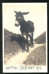 AK Esel auf einem Weg im Gebirge