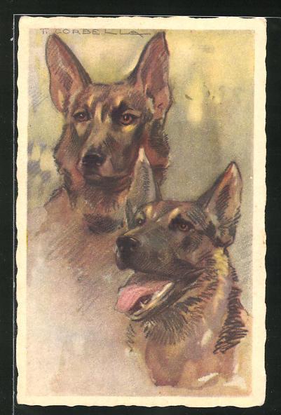 Künstler-AK Tito Corbella: Schäferhund, zwei Studien