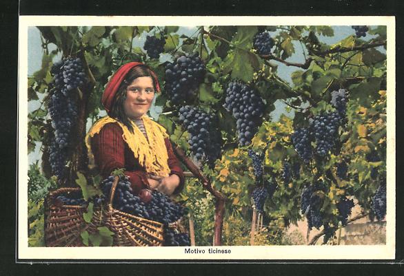 AK Motivo ticinese, Bäuerin bei der Weintraubenernte