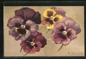 Künstler-AK Anna Haller: Violette und gelbe Veilchen