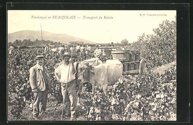 AK Beaujolais, Transport du Raisin, Weinernte mit Ochsengespann