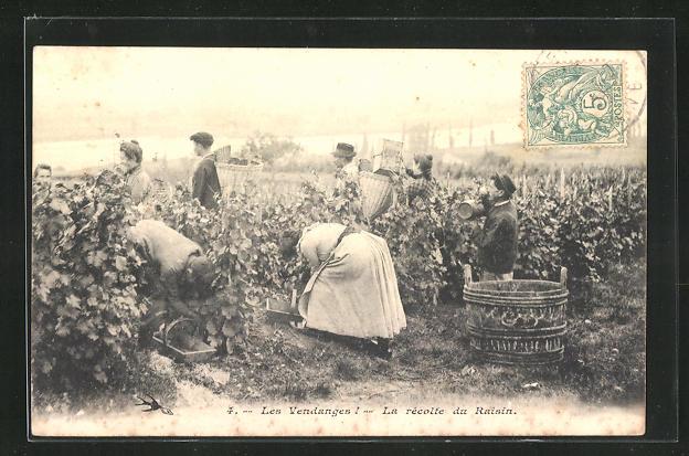 AK Les Vendanges, la Recolte du Raisin, Weinernte