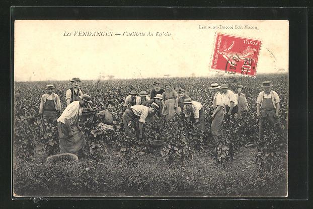 AK Les Vendanges, Cueillette du Raisin, Weinernte
