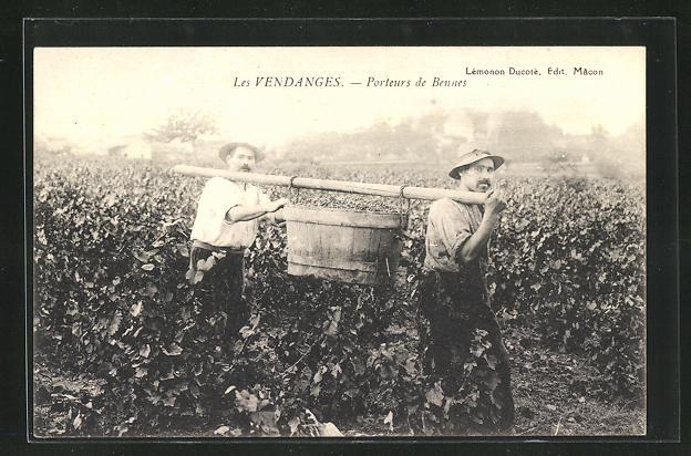 AK Les Vendanges, Porteurs de Bennes, Weinbauer bei der Arbeit